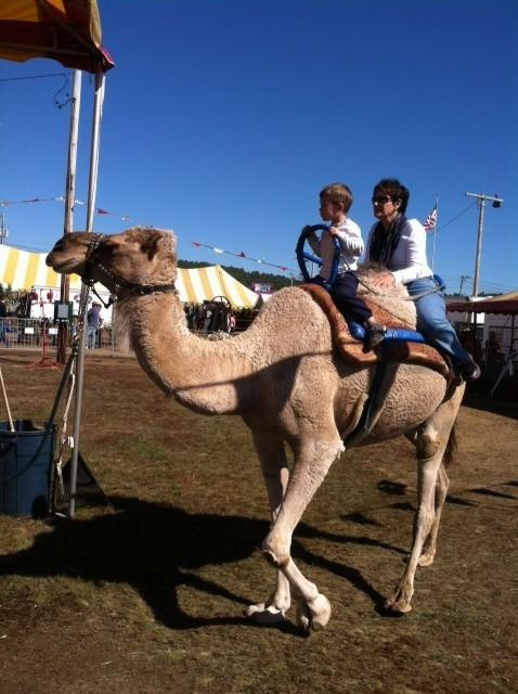 Wait.... what... Nana's on a camel!